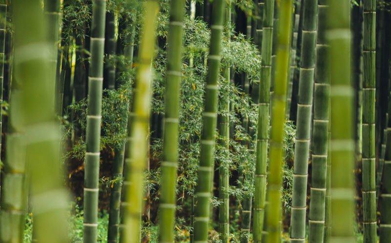 Abbigliamento in bambù vantaggi