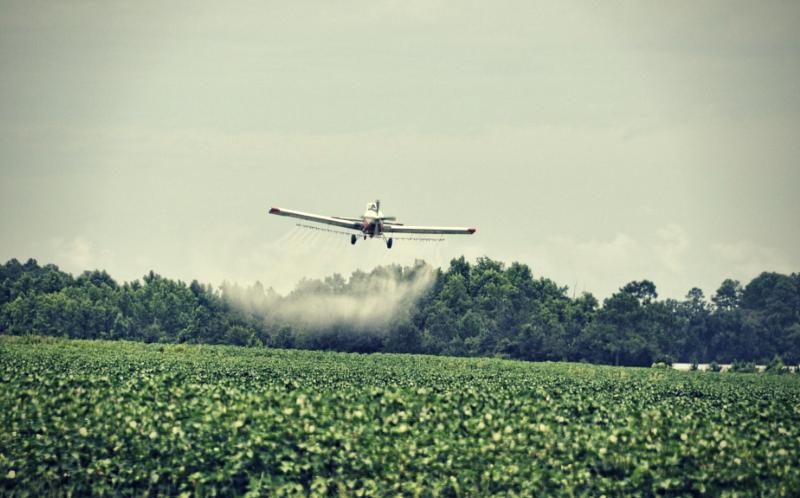 pesticidi coltivazione cotone