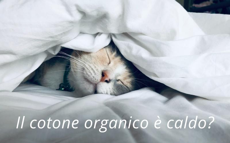 cotone organico è caldo